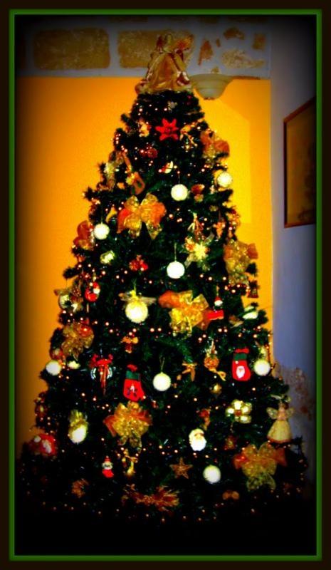 kauft ihr dieses jahr einen weihnachtsbaum opinionstar. Black Bedroom Furniture Sets. Home Design Ideas