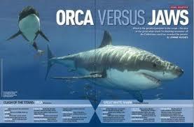 Killerwal Vs Weißer Hai